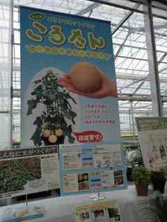 サカタ2.JPG